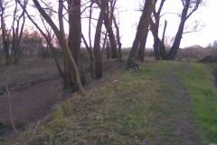 Kép275_1