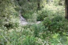 Látóhegy 1 tó (12)